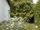 Gartenneugestaltung